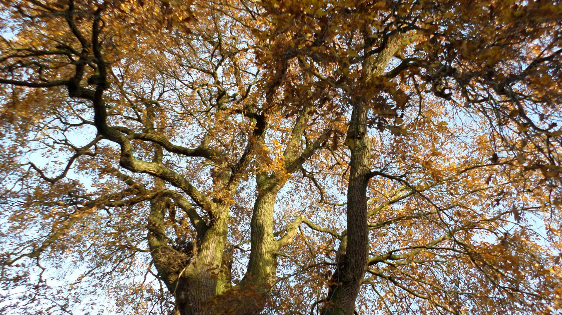 Krone im Herbst