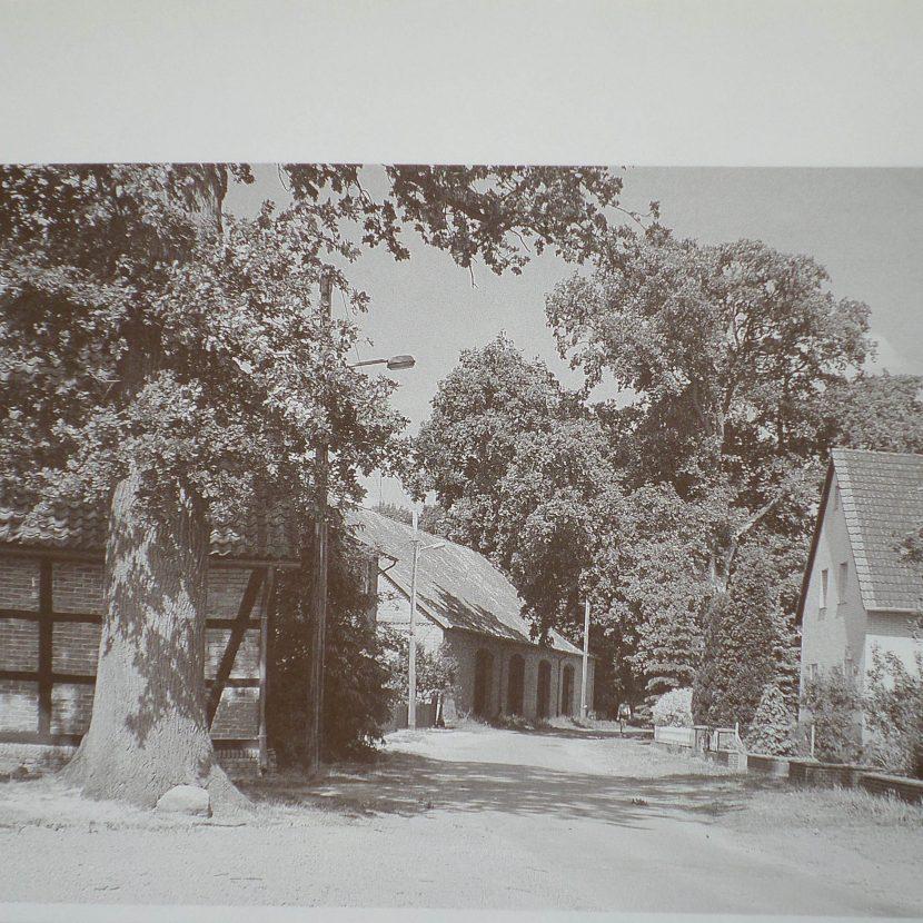 Zwei Eichen 1988