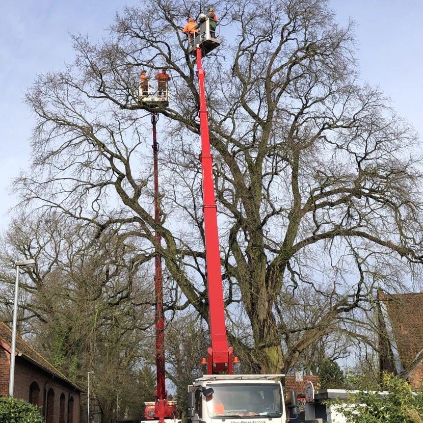Hubsteiger am Baum